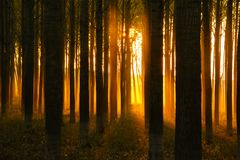 Mystic sunset and sunlight in dense forest royalty free stock image