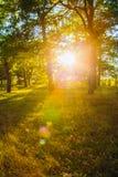 Sunset In Forest Trees. Natural Sunlight Sunshine In Woods. Sunn Stock Images