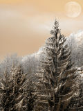 Sunset in forest in winter time Stock Photos