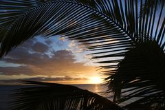 Sunset framed by palm fronds. Stock Image