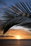 Sunset framed by palm, Maui. stock images