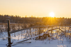 Sunset in frosty winter in forest. Royalty Free Stock Photography