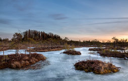 Sunset in the frozen bog Royalty Free Stock Image