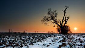 Sunset on frozen field. With old tree stock image