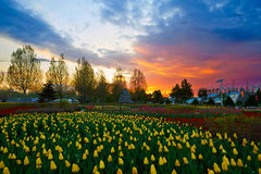The sunset of garden Royalty Free Stock Images