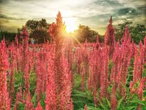 Sunset in garden Stock Photography