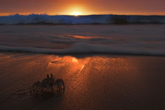 Amazing beach sunset while ghost crab trying to hide from the waves Royalty Free Stock Images