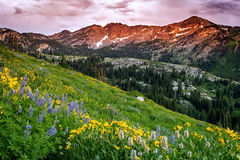 Sunset glow in the Wasatch mountains. Royalty Free Stock Photography
