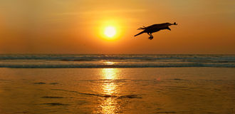 Sunset in Goa. Stock Photography