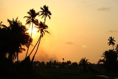 Sunset in Goa. Landscape picture of sunset in Goa yellow sky royalty free stock photos