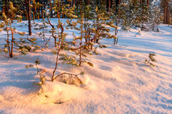 Sunset gold colors on snow Royalty Free Stock Images