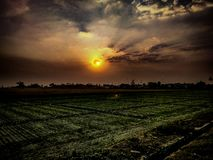Sunset and golden cloudy sky. Over the agricultural land in India royalty free stock photo