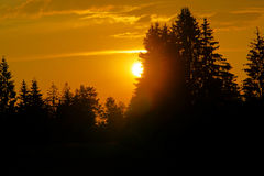 Sunset with golden colors and silhouettes of trees Stock Images
