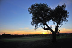 Sunset at the golf course, Andalusia, Spain. Stock Image