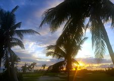 Sunset on golf course with palm trees royalty free stock photo