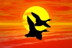 Sunset with goose. Red sunset with wild goose silhouette Stock Illustration