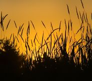 Sunset grass Stock Image