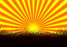 Sunset and grass Stock Images