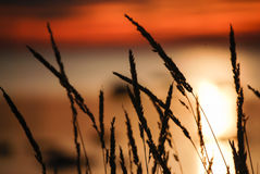 Sunset and grass Royalty Free Stock Photos