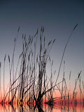 Sunset Grass Stock Photography