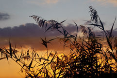 Sunset and grass Royalty Free Stock Image