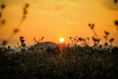 Sunset at grass field Royalty Free Stock Photography
