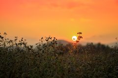Sunset at grass field Royalty Free Stock Photo