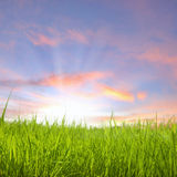 Sunset on grass field Royalty Free Stock Photography
