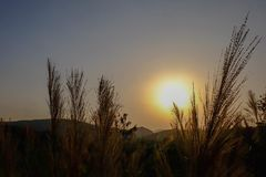 Sunset and grass flower royalty free stock photos