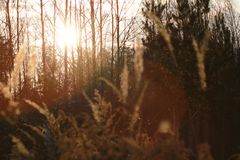 Sunset with grass and forest. Stock Photos