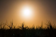 Sunset grass on island Stock Images