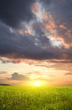 Sunset on grass meadow. Stock Photo