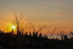 Sunset with grass and ocean Stock Image