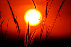 Sunset grass Royalty Free Stock Photo