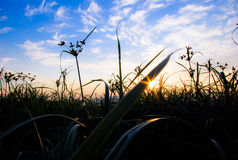 Sunset grass. Sunset over a field with blue sky and clouds Stock Photos