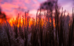 Sunset and grass Royalty Free Stock Photography