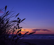 Sunset grass silhouette water beach Stock Images