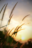 Sunset after grass. stock photography