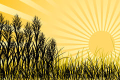 Sunset and grass, vector. Sunset and meadow grass, vector illustration Royalty Free Stock Photos