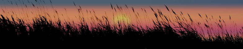 Sunset grasses. Silhouette and sunset with grasses Stock Image