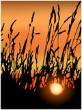 Sunset in grasses stock images