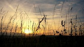 Sunset with grasshopper and bird sounds Stock Photo