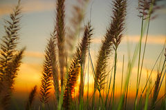 Sunset on grassland Stock Photos