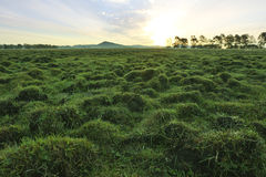 Sunset in grassland Stock Photos