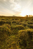 Sunset in grassland Stock Photography