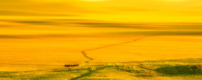 Sunset on the grassland Stock Photo