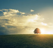 Sunset in grassy field. royalty free stock photography