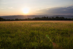 Sunset in Grassy Meadow Stock Images