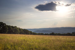 Sunset in Grassy Meadow Stock Image