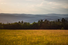 Sunset in Grassy Meadow Royalty Free Stock Images